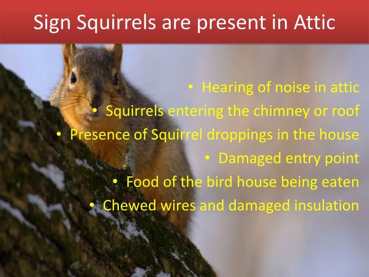 Sign Squirrels are present in Attic