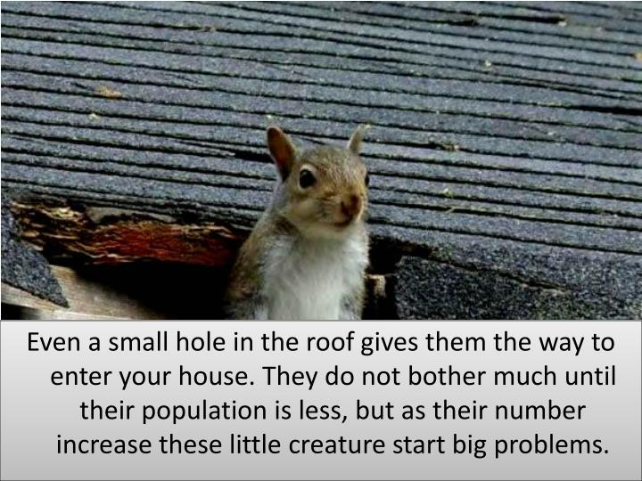 Even a small hole in the roof gives them the way to enter your house. They do not bother much until their population is less, but as their number increase these little creature start big problems.