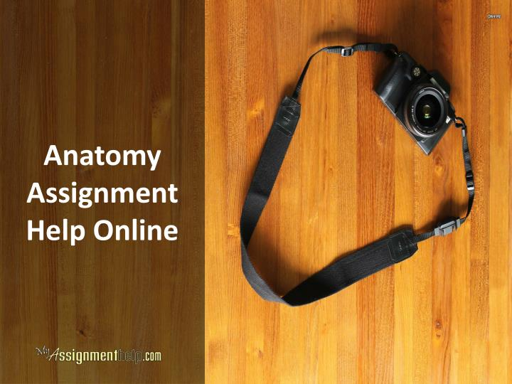 Anatomy assignment help online