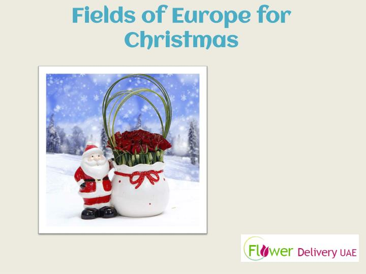 Fields of Europe for Christmas