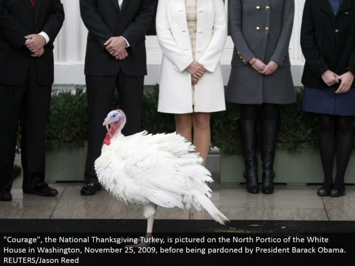 """Courage"", the National Thanksgiving Turkey, is envisioned on the North Portico of the White House in Washington, November 25, 2009, preceding being exculpated by President Barack Obama. REUTERS/Jason Reed"
