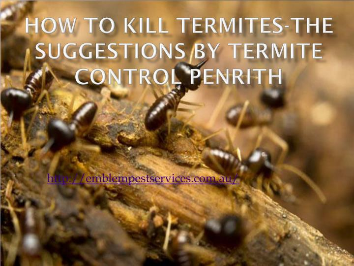 How to kill termites the suggestions by termite control penrith
