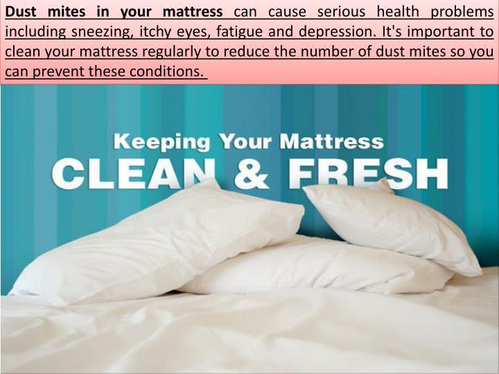 Dust mites in your mattress
