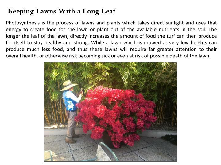 Keeping Lawns With a Long