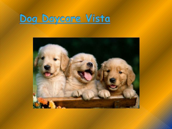 Dog Daycare Vista