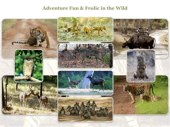 Adventure Fun & Frolic in the Wild