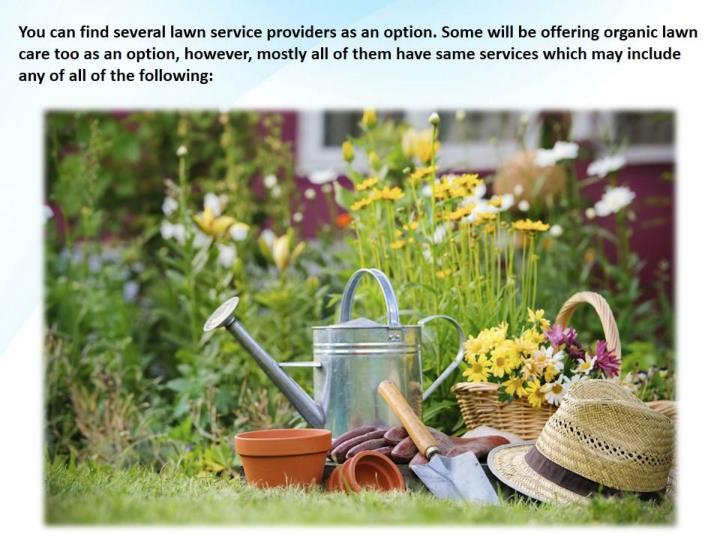 Lawn service companies and what they offer