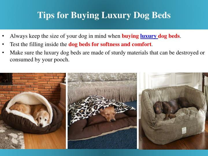 Tips for Buying Luxury Dog Beds
