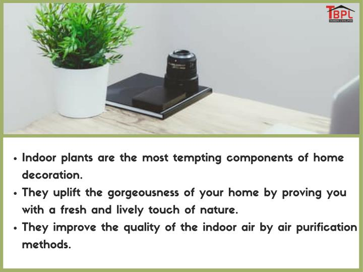 Indoor plants are the most tempting components of home