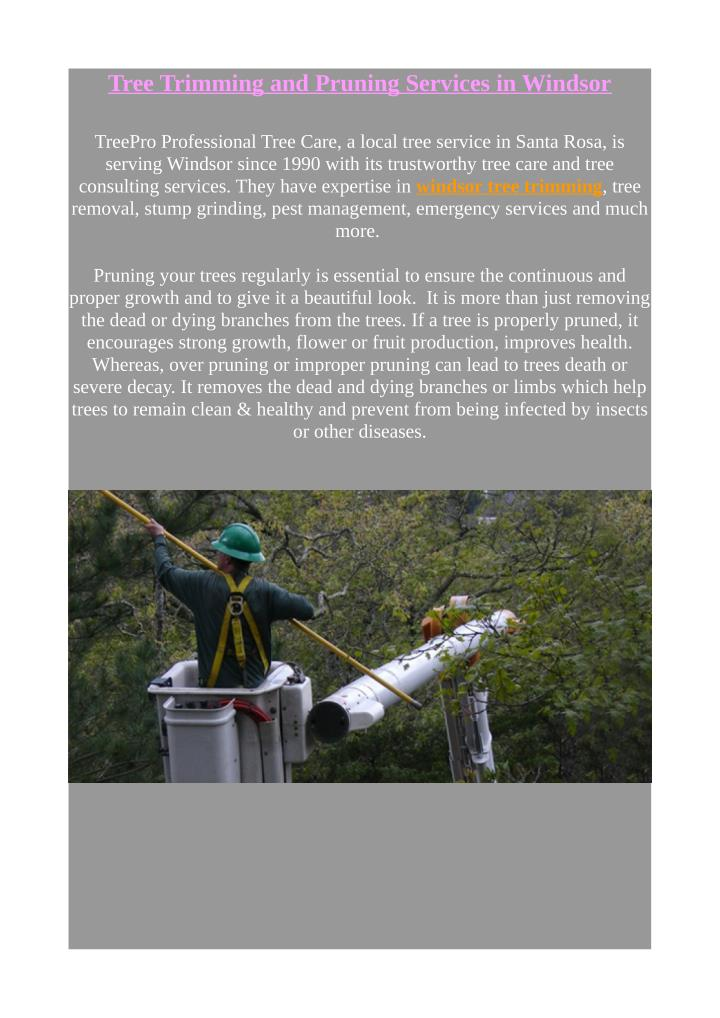 Tree Trimming and Pruning Services in Windsor