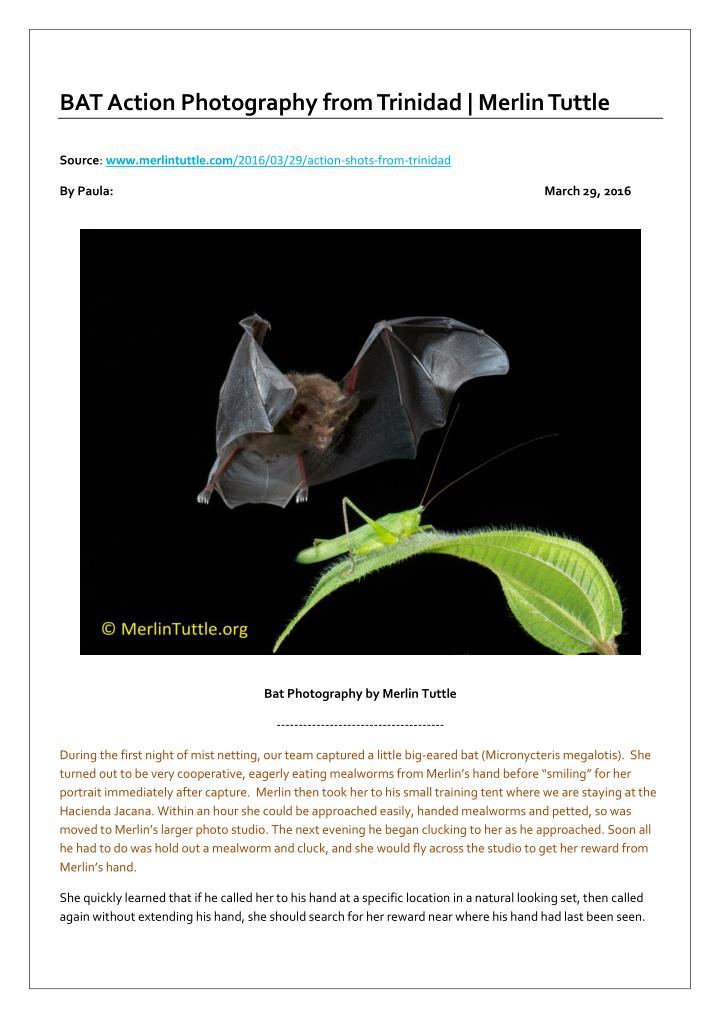 BAT Action Photography from Trinidad | Merlin Tuttle