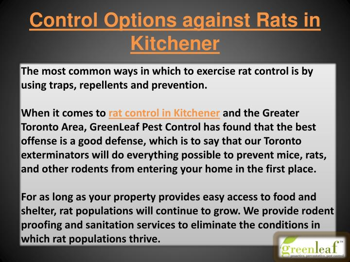 Control Options against Rats in Kitchener