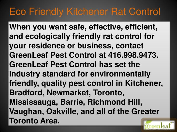 Eco Friendly Kitchener Rat Control