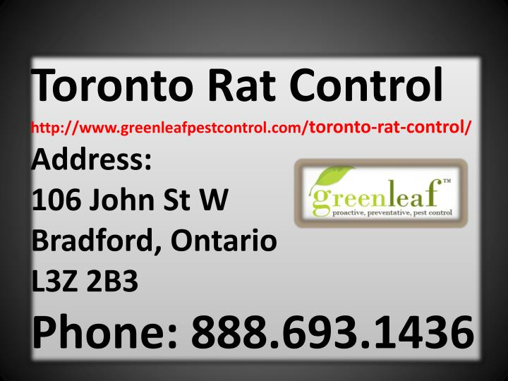 Toronto Rat Control