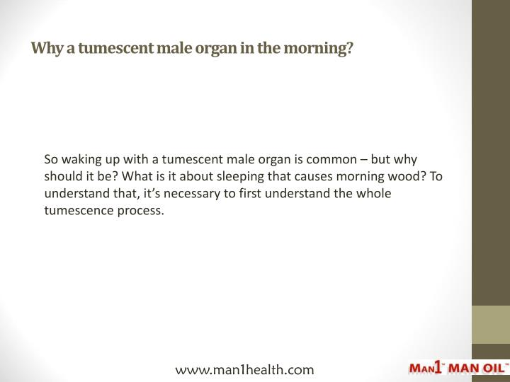 Why a tumescent male organ in the morning?
