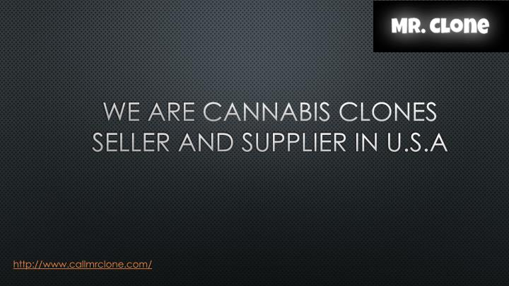 we are cannabis clones seller and supplier in u s a