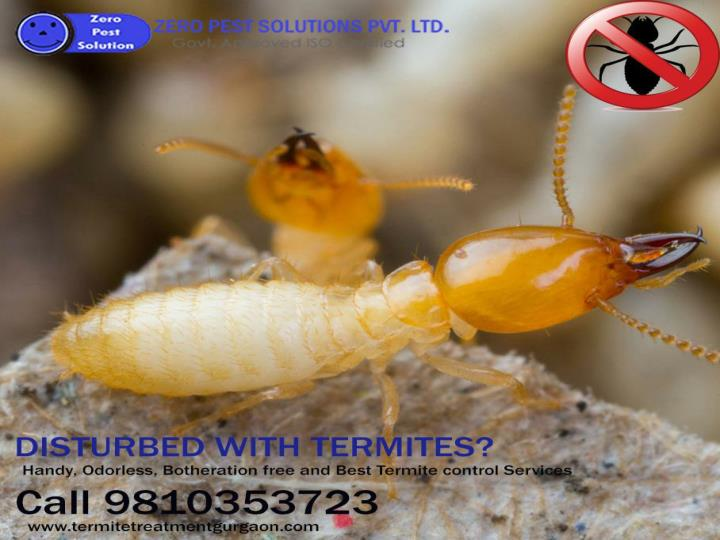 Get 10 off on termite pest control services call 9810353723 for free inspection