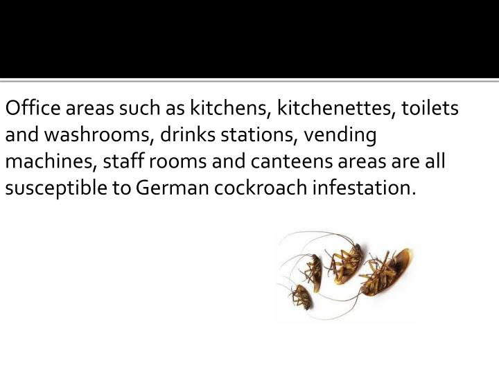 Office areas such as kitchens, kitchenettes, toilets and washrooms, drinks stations, vending machines, staff rooms and canteens areas are all susceptible to German cockroach infestation.