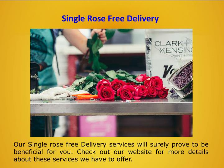 Single Rose Free Delivery