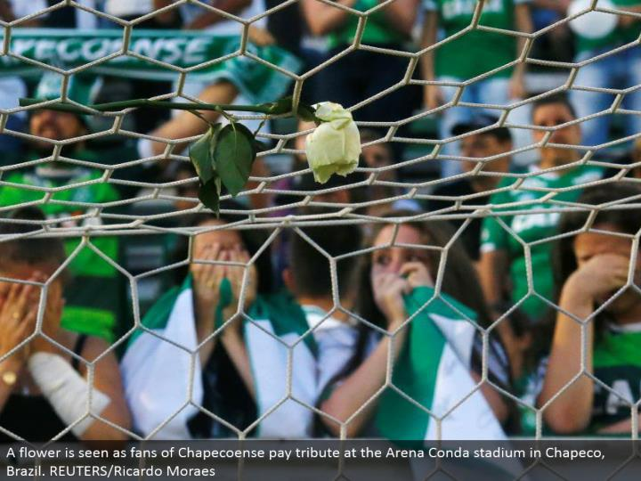 A blossom is viewed as fanatics of Chapecoense pay tribute at the Arena Conda stadium in Chapeco, Brazil. REUTERS/Ricardo Moraes