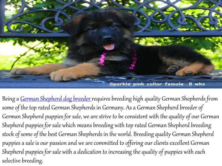 Being a German Shepherd dog breeder requires breeding high quality German Shepherds from