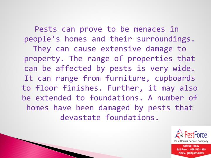 Pests can prove to be menaces in people's homes and their surroundings. They can cause extensive damage to property. The range of properties that can be affected by pests is very wide. It can range from furniture, cupboards to floor finishes. Further, it may also be extended to foundations. A number of homes have been damaged by pests that devastate foundations.