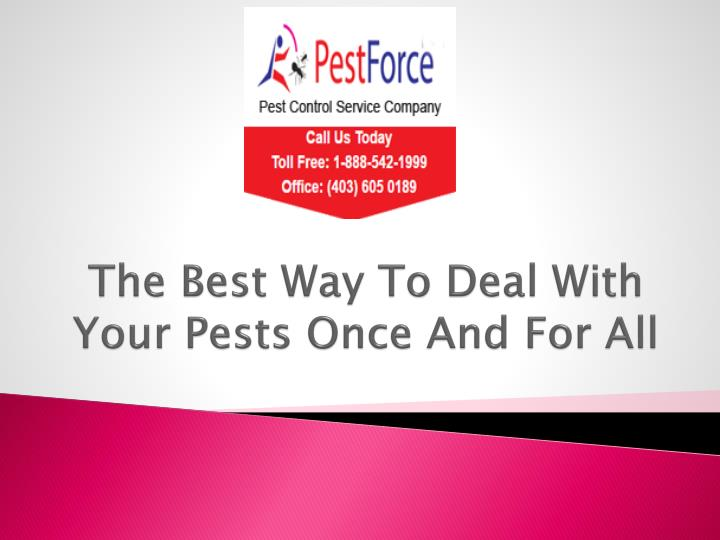 The best way to deal with your pests once and for all