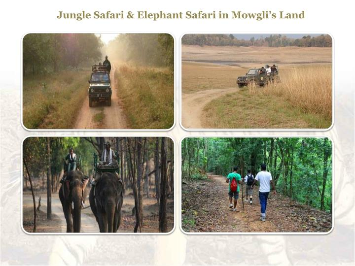 Jungle Safari & Elephant Safari in Mowgli's Land