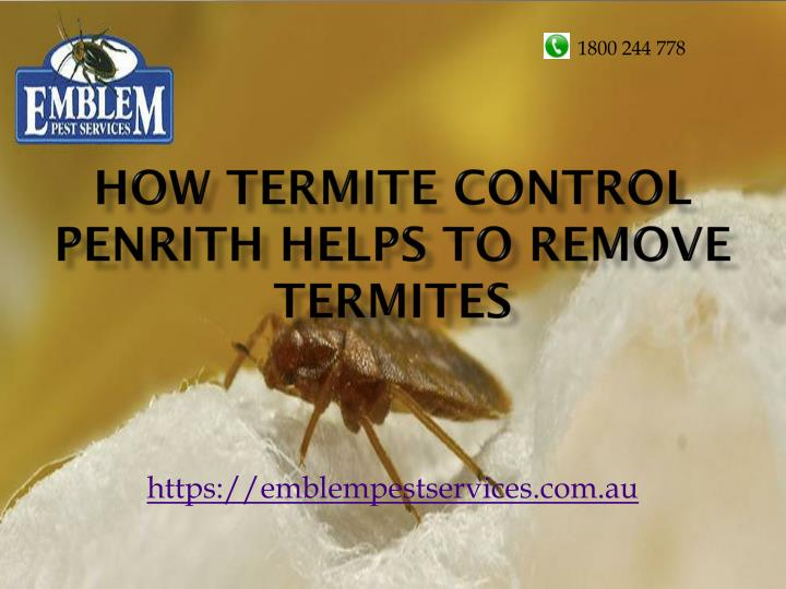 Home Remedies For Termites Remove Termites From Furniture - How-to-remove-termites-from-furniture