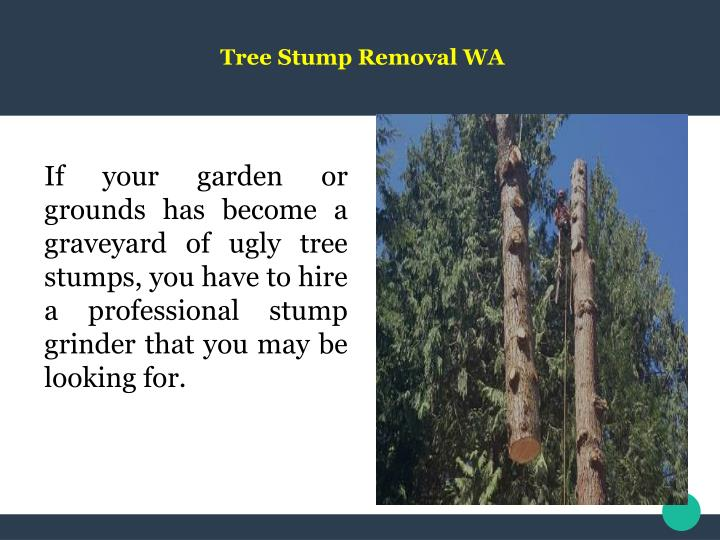 Ppt fruit tree pruning bellingham powerpoint presentation id 7475314 - Fruit trees every type weather area ...