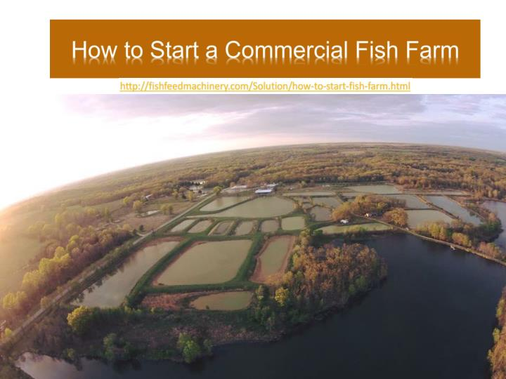 ppt how to start a commercial fish farm powerpoint