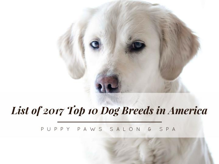 List of 2017 Top 10 Dog Breeds in America