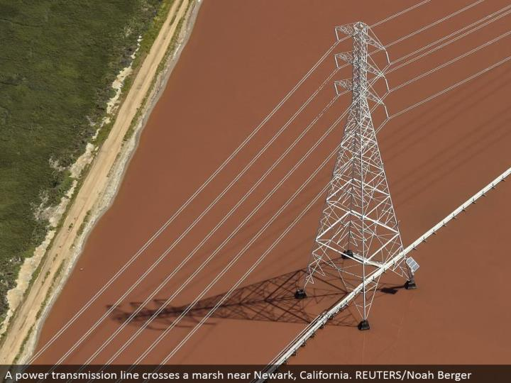 A control transmission line crosses a swamp close Newark, California. REUTERS/Noah Berger