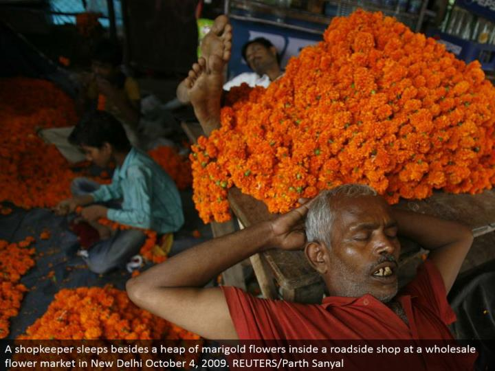 A retailer rests other than a stack of marigold blooms inside a roadside shop at a discount blossom showcase in New Delhi October 4, 2009. REUTERS/Parth Sanyal