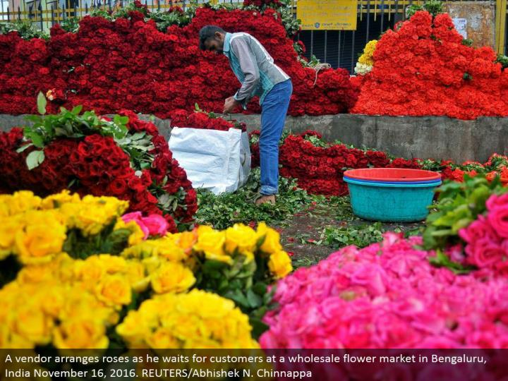 A seller masterminds roses as he sits tight for clients at a discount bloom showcase in Bengaluru, India November 16, 2016. REUTERS/Abhishek N. Chinnappa