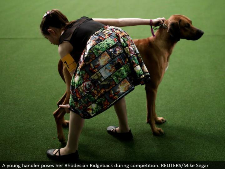 A youthful handler represents her Rhodesian Ridgeback amid rivalry. REUTERS/Mike Segar
