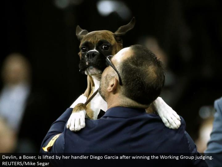 Devlin, a Boxer, is lifted by her handler Diego Garcia in the wake of winning the Working Group judging. REUTERS/Mike Segar