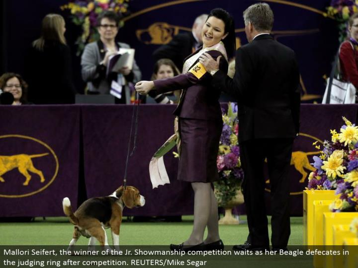 Mallori Seifert, the victor of the Jr. Dramatic skill rivalry holds up as her Beagle craps in the judging ring after rivalry. REUTERS/Mike Segar