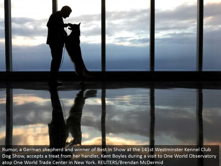 Rumor, a German shepherd and champ of Best In Show at the 141st Westminster Kennel Club Dog Show, acknowledges a treat from her handler, Kent Boyles amid a visit to One World Observatory on One World Trade Center in New York. REUTERS/Brendan McDermid