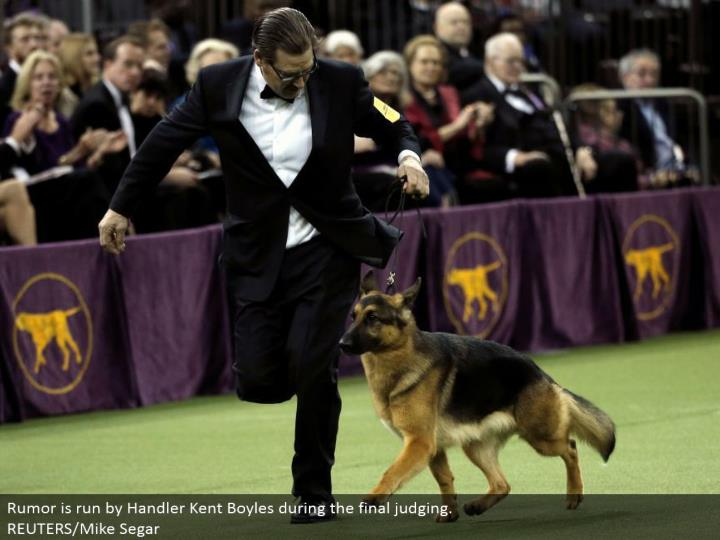 Rumor is controlled by Handler Kent Boyles amid the last judging.  REUTERS/Mike Segar