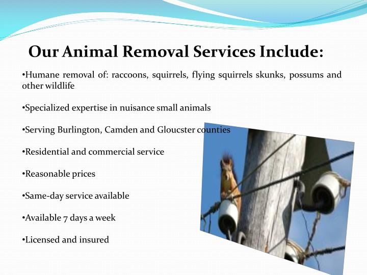 Ppt  Raccoon , Squirrel Removal Vincentown And Cherry. Pizza Orgasmica Delivery Old Boarding Schools. Mobile Payment Applications Sun Realty Obx. Youtube Conference Call Looking For A Plumber. Capital One Auto Refinance Credit Score. Assisted Living Clermont Fl Wake Up Alarms. Residential Window Installation. Website Design Elements Conventional Fha Loan. Website Builder For Mac Free