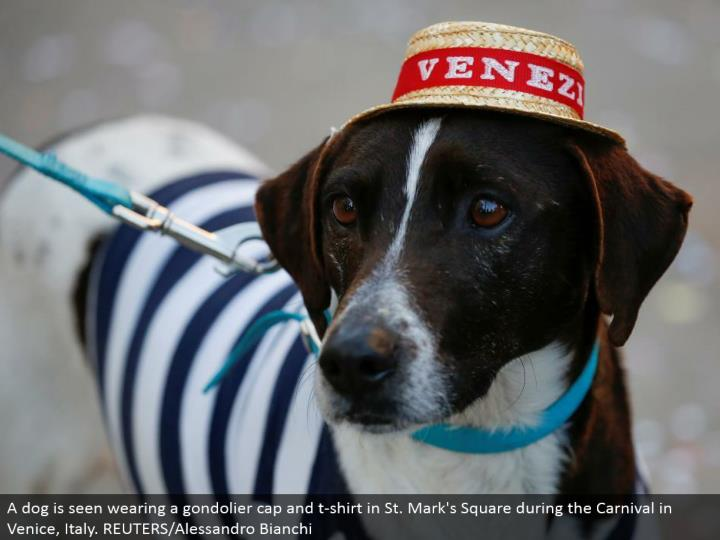 A pooch is seen wearing a gondolier top and shirt in St. Check's Square amid the Carnival in Venice, Italy. REUTERS/Alessandro Bianchi