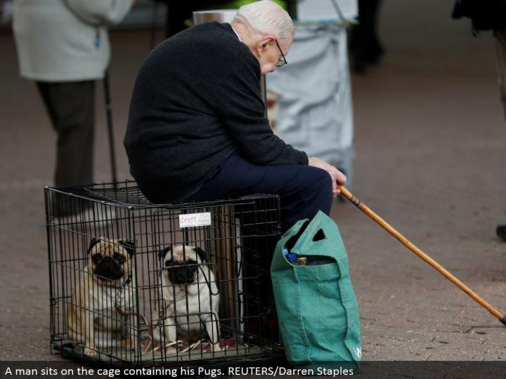 A man sits on the confine containing his Pugs. REUTERS/Darren Staples