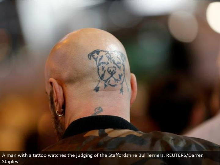 A man with a tattoo watches the judging of the Staffordshire Bul Terriers. REUTERS/Darren Staples