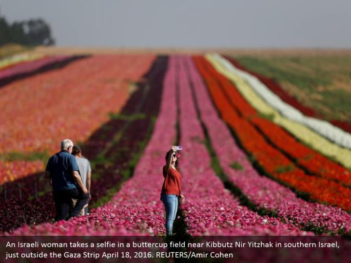 An Israeli woman takes a selfie in a buttercup field near Kibbutz Nir Yitzhak in southern Israel, just outside the Gaza Strip April 18, 2016. REUTERS/Amir Cohen
