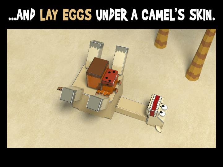 ...and lay eggs under a camel's skin.
