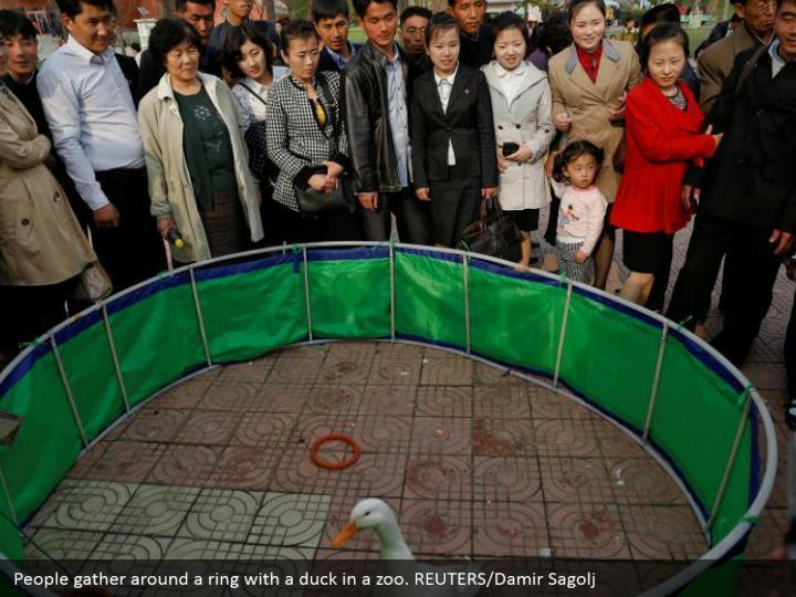 People gather around a ring with a duck in a zoo. REUTERS/Damir Sagolj