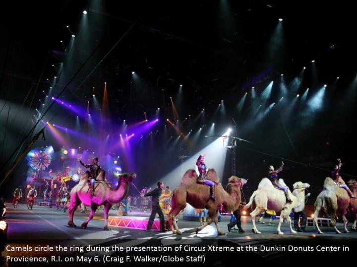 Camels circle the ring during the presentation of Circus Xtreme at the Dunkin Donuts Center in Providence, R.I. on May 6. (Craig F. Walker/Globe Staff)