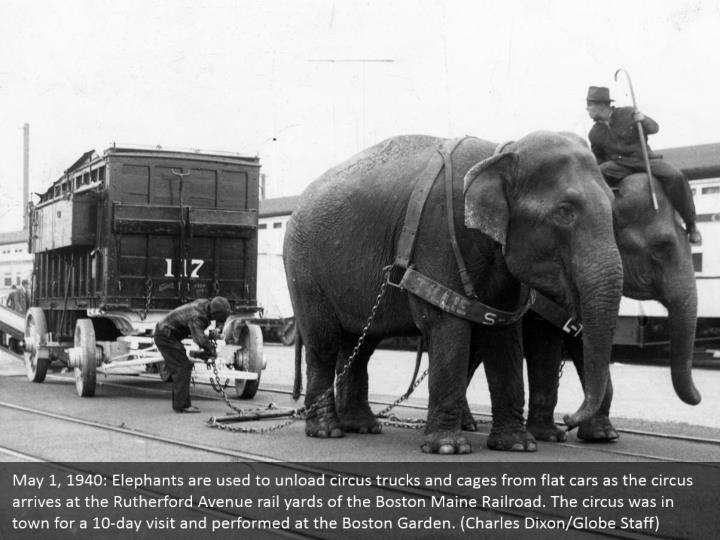 May 1, 1940: Elephants are used to unload circus trucks and cages from flat cars as the circus arrives at the Rutherford Avenue rail yards of the Boston Maine Railroad. The circus was in town for a 10-day visit and performed at the Boston Garden. (Charles Dixon/Globe Staff)