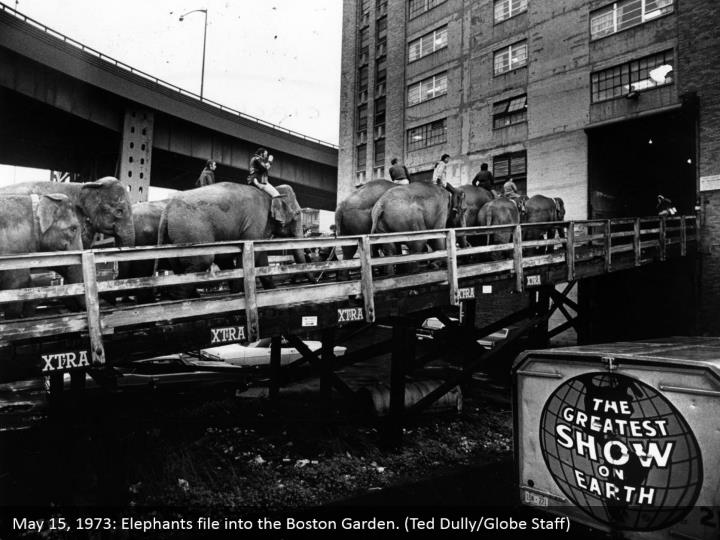 May 15, 1973: Elephants file into the Boston Garden. (Ted Dully/Globe Staff)